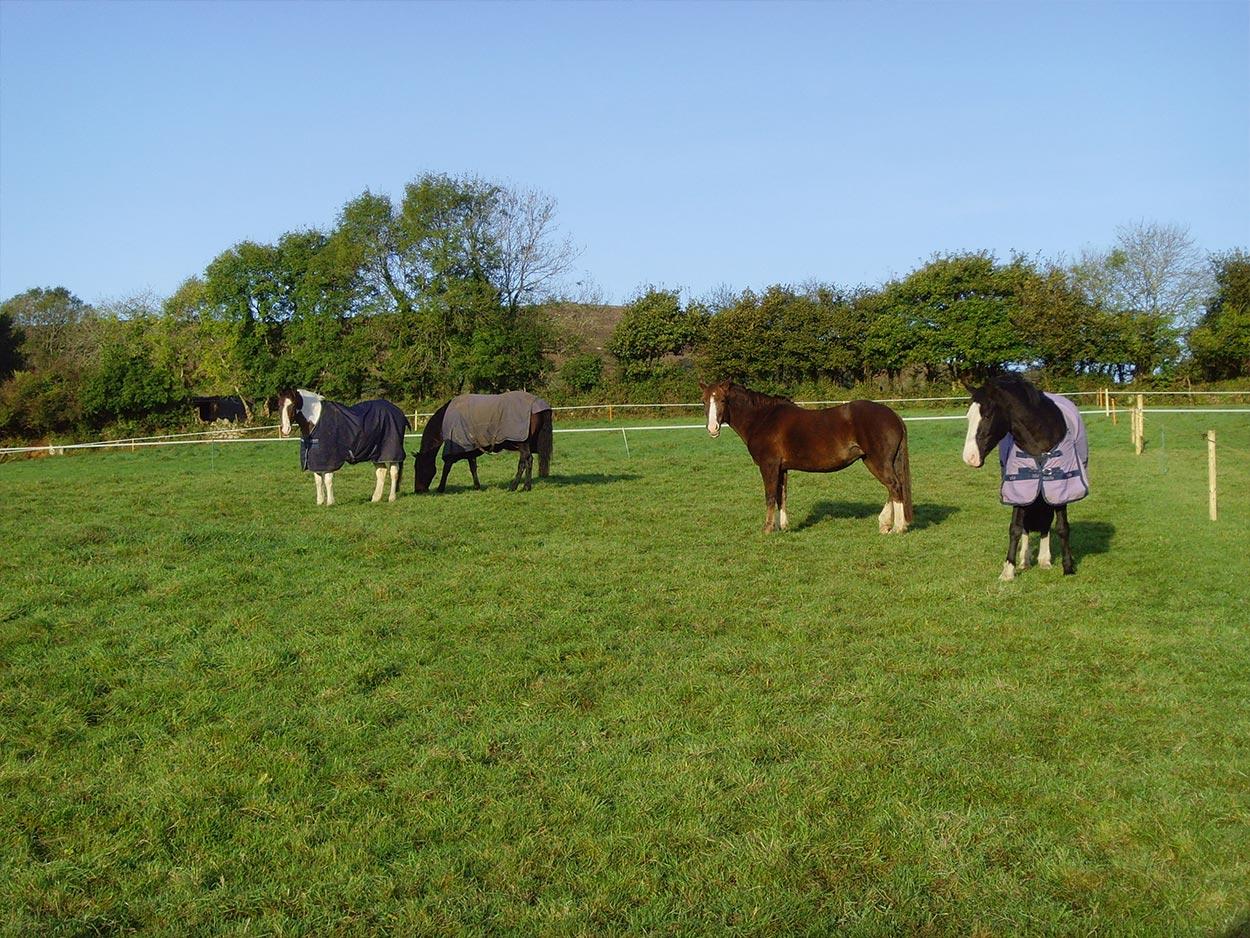 Cheston Farm Equestrian Centre Riding School Pony Club